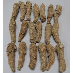 Click here to learn more about the Half Short Long Extra Colossal 5 Year Old Wisconsin Ginseng Root.